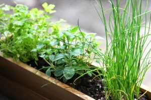 herbs on a windowsill, Gardenista Houseplants Photo Gallery