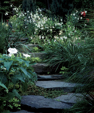 Night Gardens: MoonGardens.