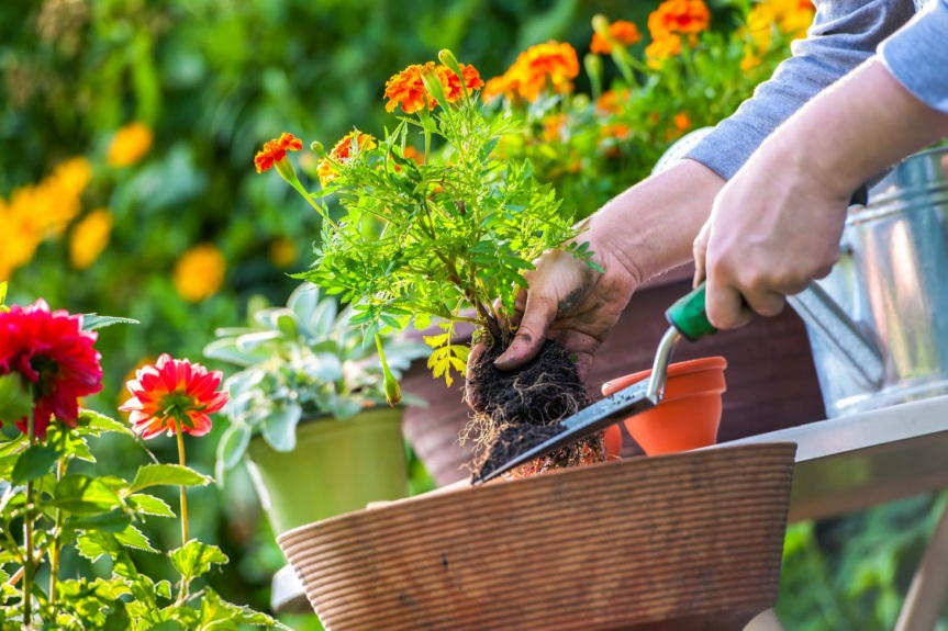 Aromatherapy Herb Garden & How to Guarantee Your Garden Starts off on the Right Foot.