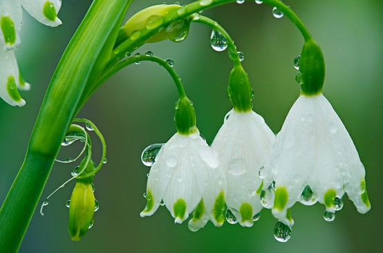 Dew and Flower Essences