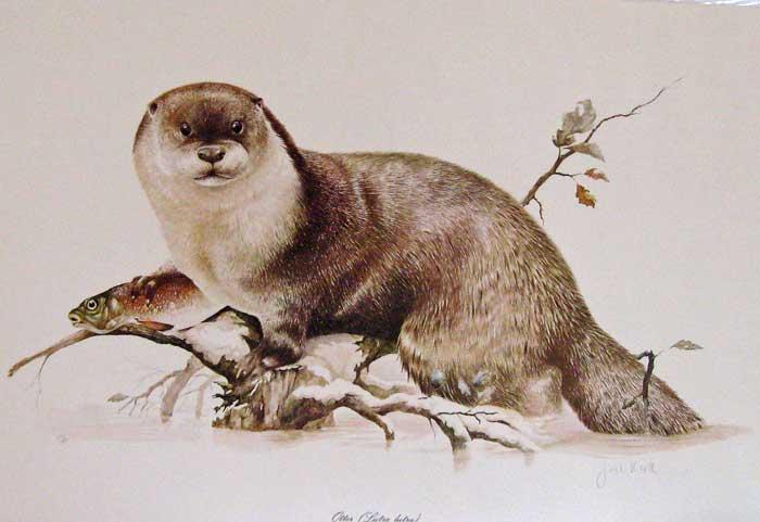 Medicine Woman ~Otter