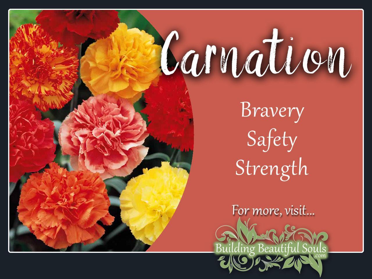 Carnation Meaning & Symbolism | January Birth Flower | Flower ...