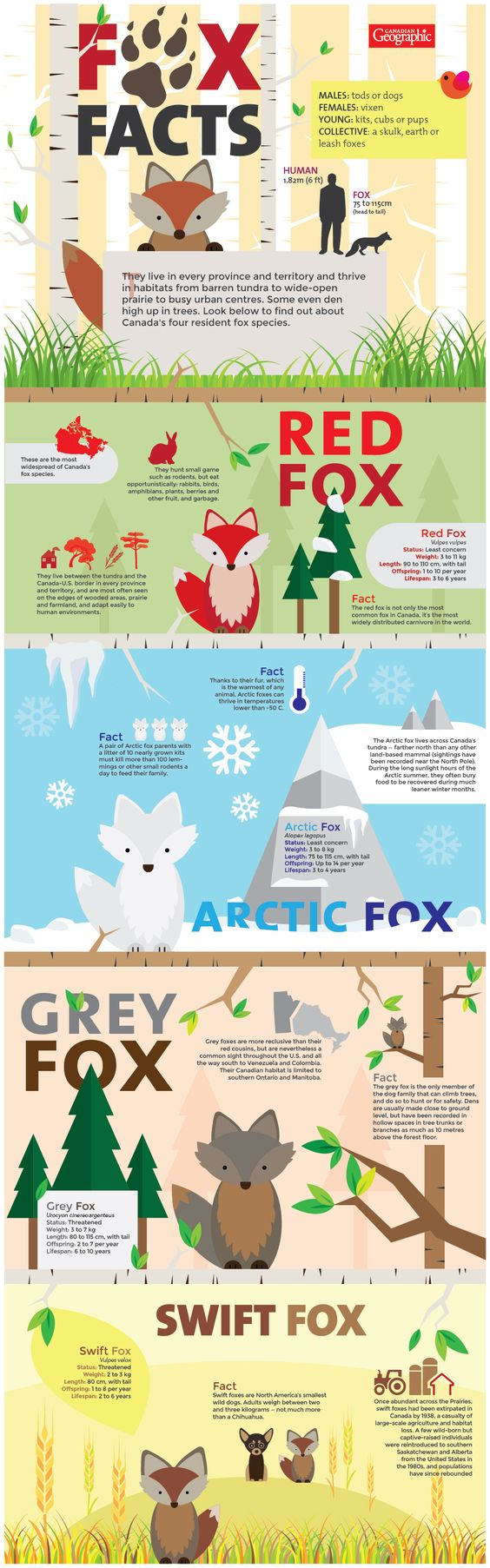 fox-chart