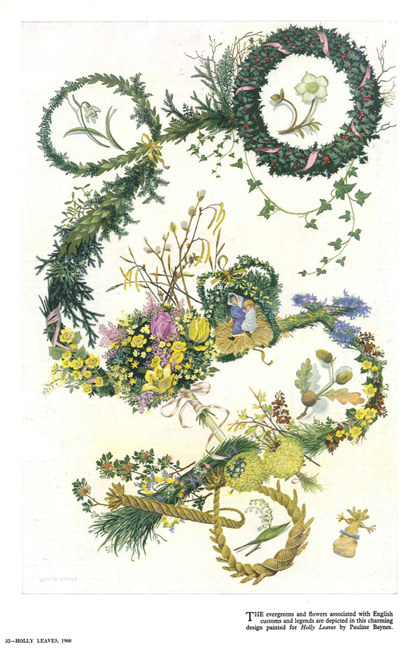 holly-leaves-drawing-herbal