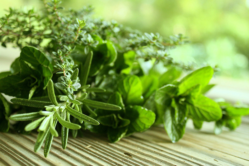 herbs24