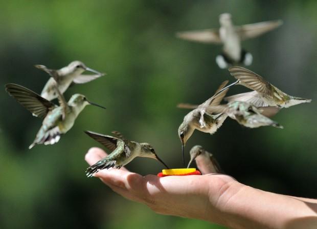 Animal Spirit and Medicine: HummingbirdMedicine