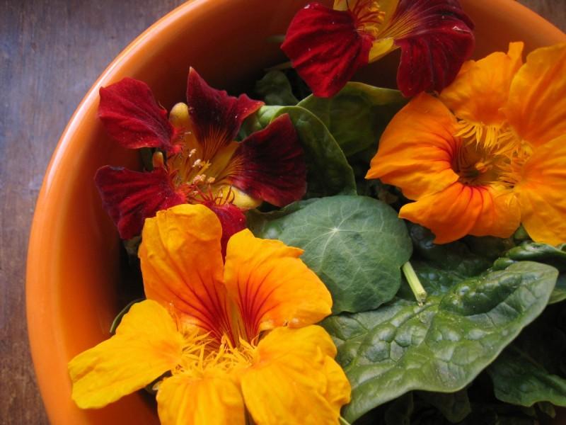 nasturtiums bowl