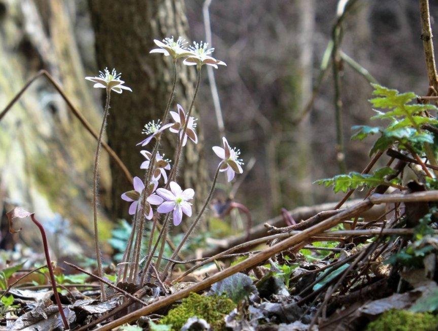 Medicinal and HerbalWildflowers