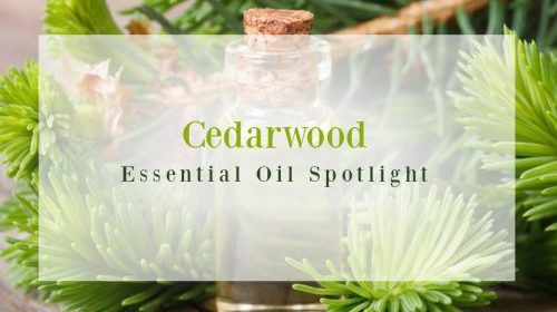 Cedarwood Essential Oil | Good Witches Homestead