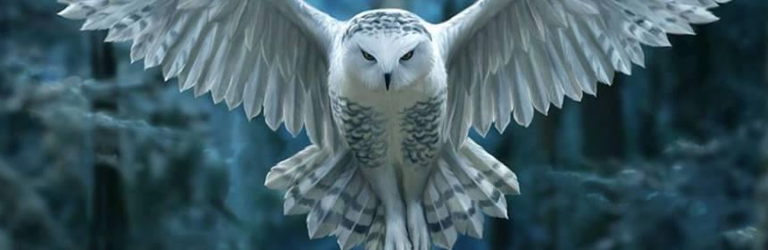 Animal Spirit And Medicine Owl Medicine Totem Good Witches Homestead