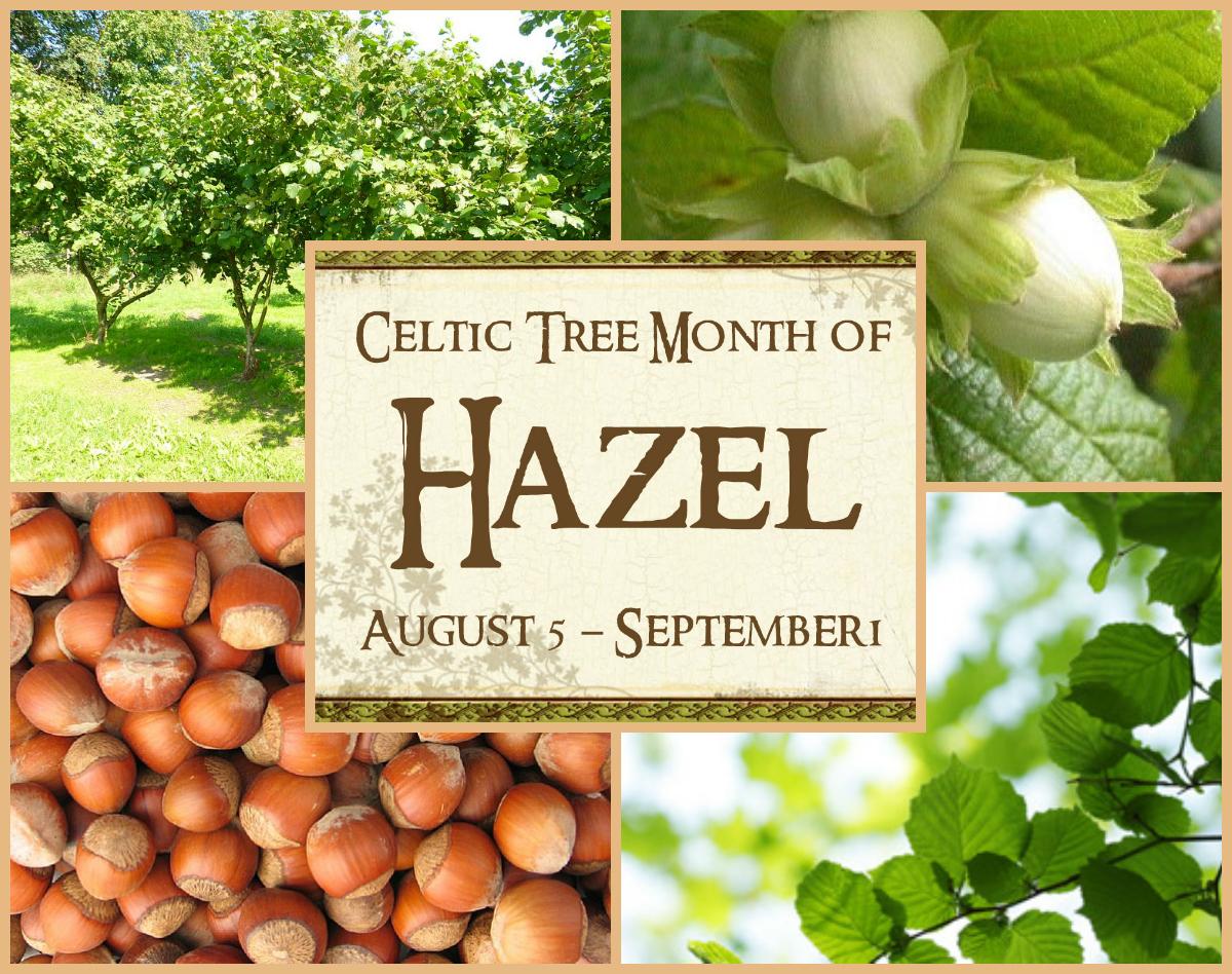 hazel-celtic-tree-month-collage.jpg