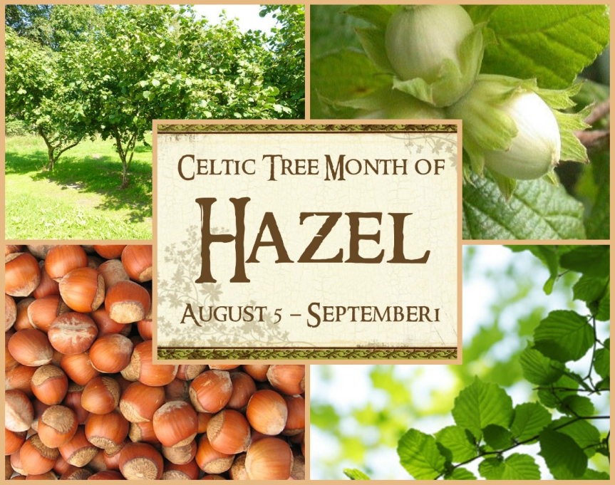 Hazel Tree: August 5 ~ September 1 {Celtic Astrology}