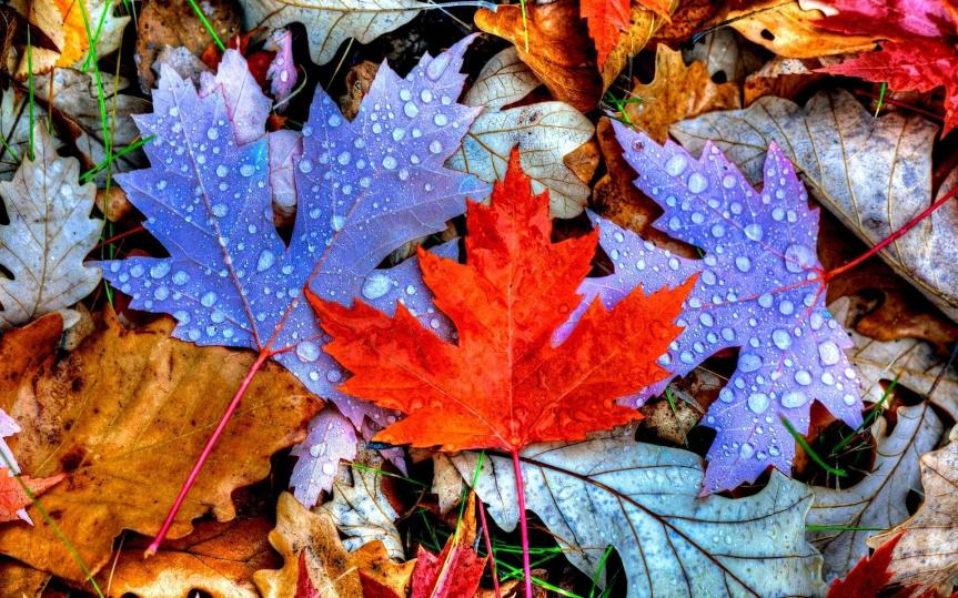 Letting Go: Using Falling Leaf Essences to Ease IntoAutumn