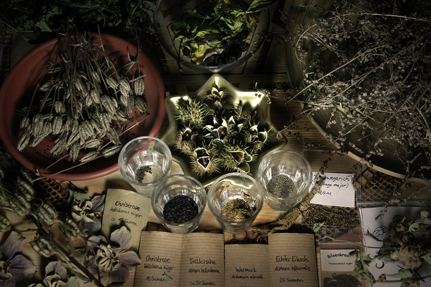 A Herbalist's Guide to a Healthy Fall and Winter