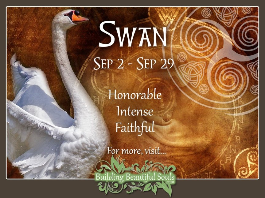 Swan Celtic Zodiac Sign