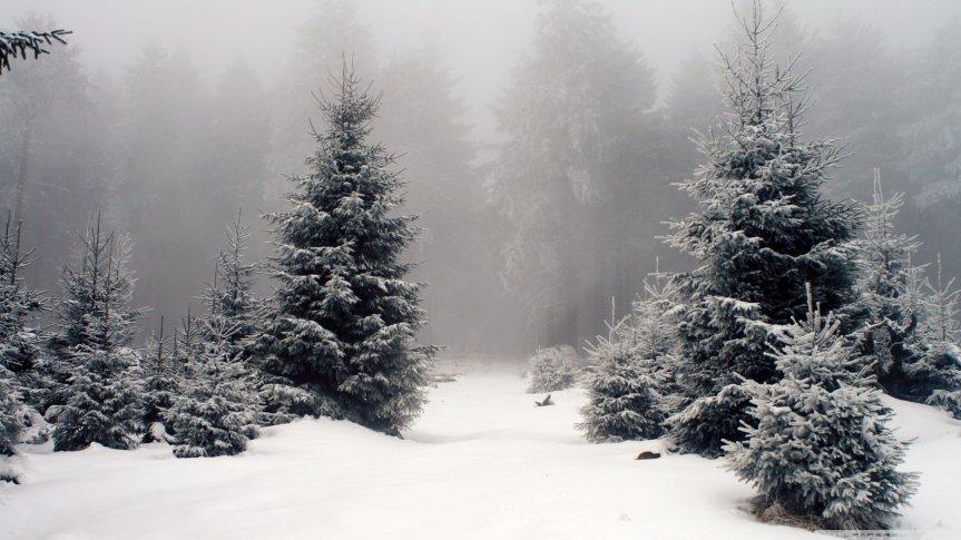 Winter Tree Lore