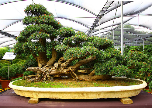 Rosemary-Bonsai-To-Make-Your-Garden-Design-More-Attractive-gardenguides