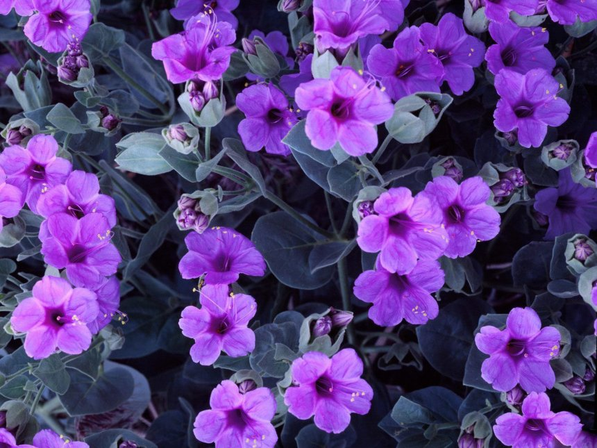 f8c5f2e80fea25 The Medicinal Properties and Health Benefits of Violets. | Good ...
