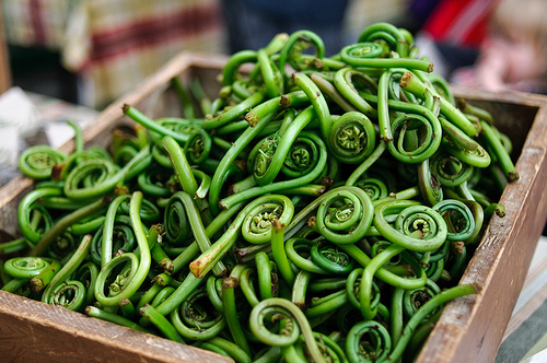 Foraging for Fiddleheads {Well, SortOf}
