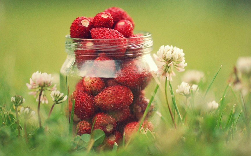 wild-strawberries-large