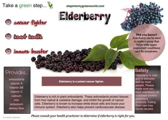 elderberry infopix