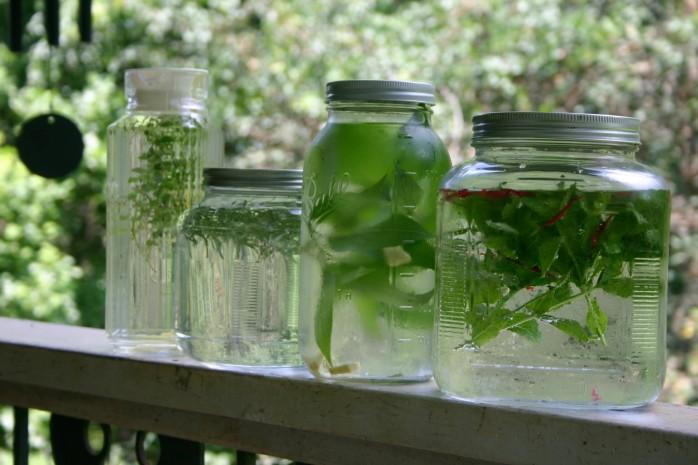 sun tea herbal