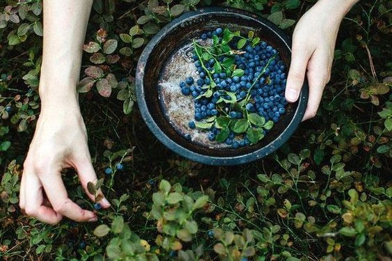herbs mercury
