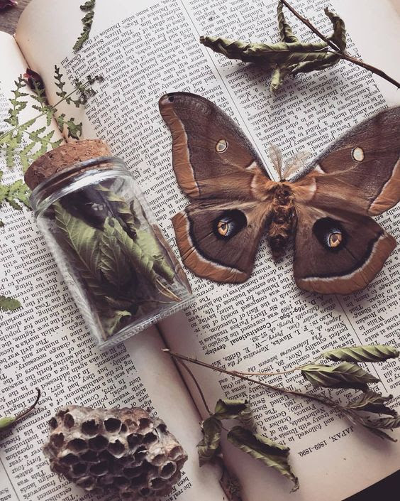 medicine butterfly