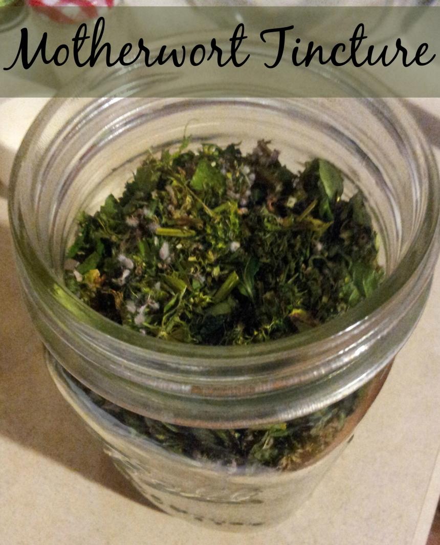 motherwort tincture