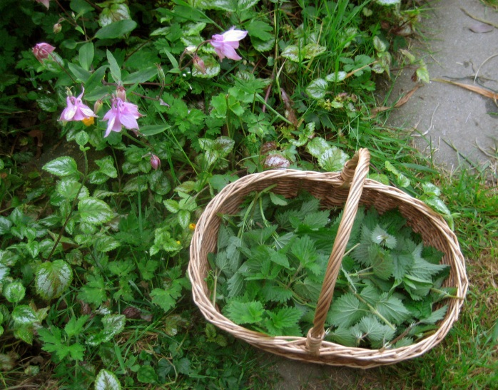 plants basket
