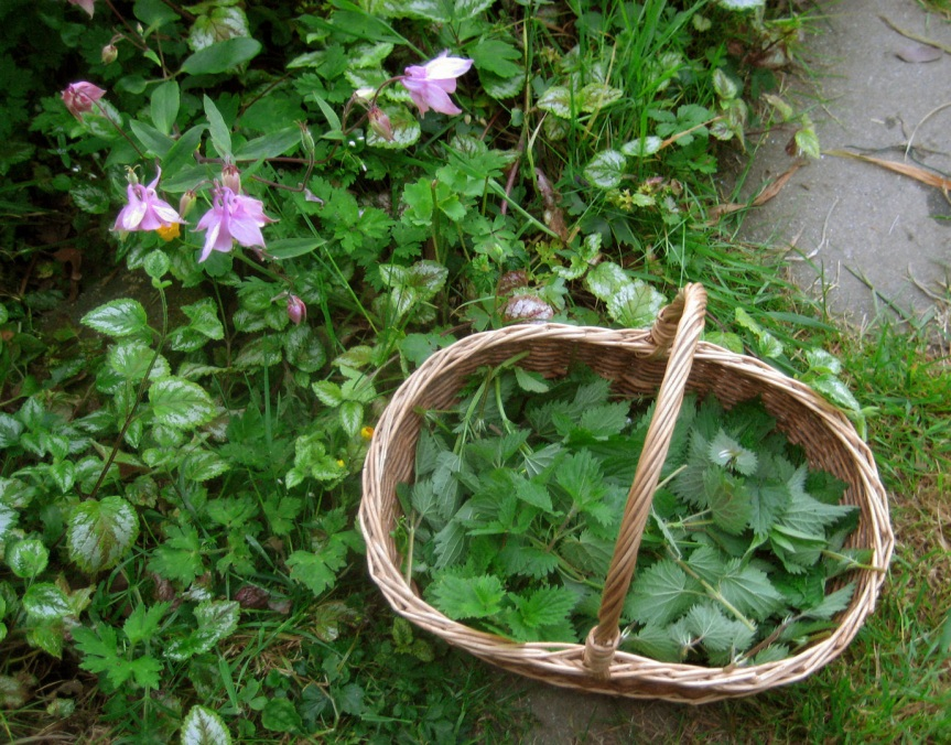 plants basket