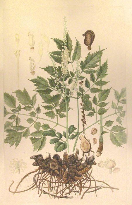 Herbs of Pluto