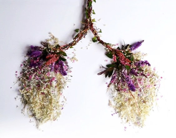 herbs lungs