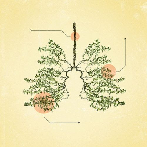 herbs lungs2