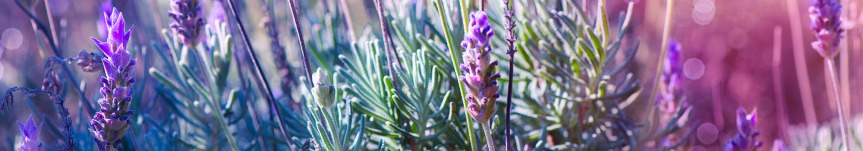 Eleven Old-Fashioned Potpourri Mixes You Can Make {LavenderPotpouriis}