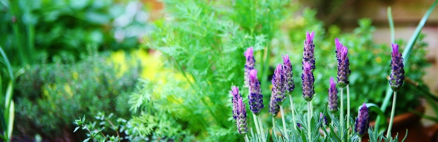 Already Thinking About Designing A Herb Garden? | Good Witches Homestead