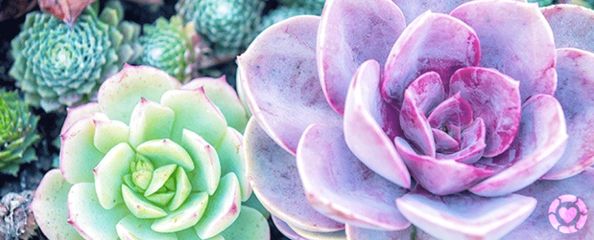 Stunning Desert Plants and Succulents [Infographic]