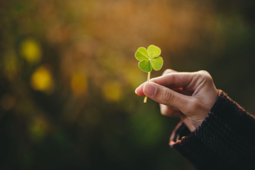 Can Four-Leaf Clovers Bring More Than Luck?