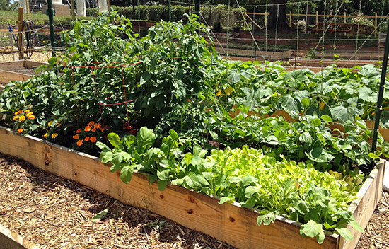 How to Build Your Own Raised Beds and Garden Boxes – Organic Gardening – MOTHER EARTH NEWS