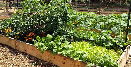 How to Build Your Own Raised Beds and Garden Boxes – Organic