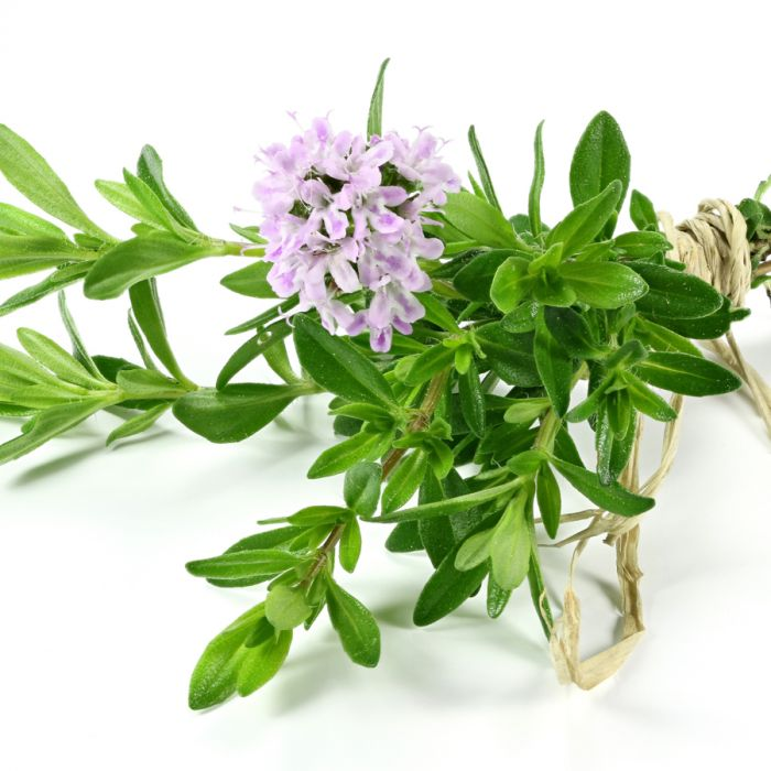 A Natural Antibiotic: Thyme Oil for Wellness andCleaning