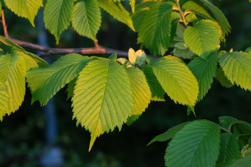 Wychwood: The Earthen Healing of the Elm — Wildling