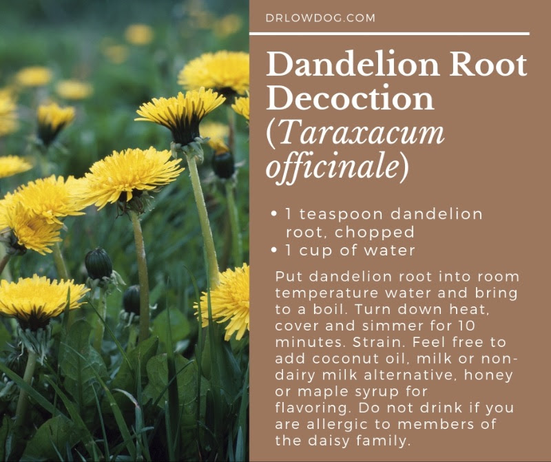 Dandelion root decoction