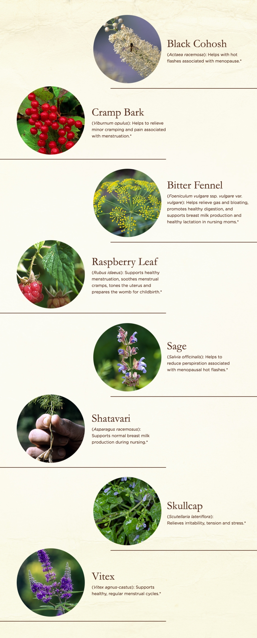 Best Herbs for Women – Traditional Medicinals – Herbal