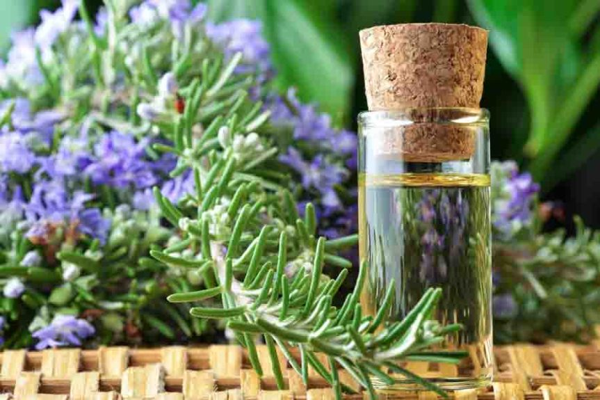 How to Make and Work with Rosemary Oil in Your Apothecary – Floranella