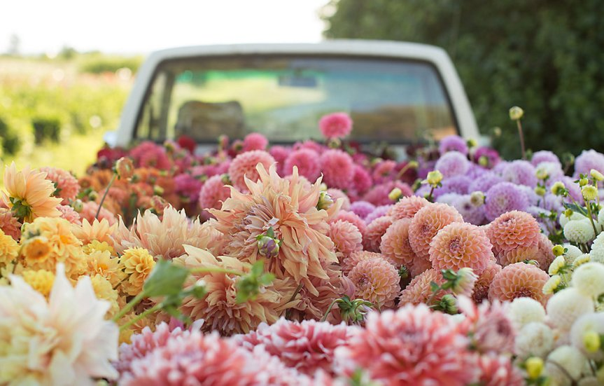 Flower blooms by Season [Visual] – ecogreenlove