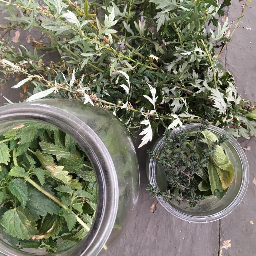 materia medica herbal jars