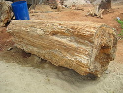 petrified-wood-log-100cm-4