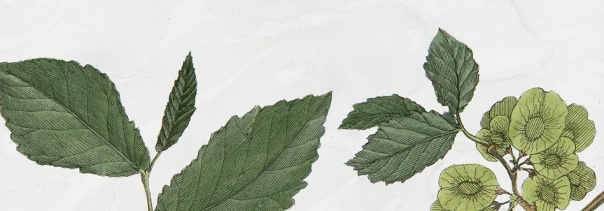Background-Images-in-The-Herbarium-B