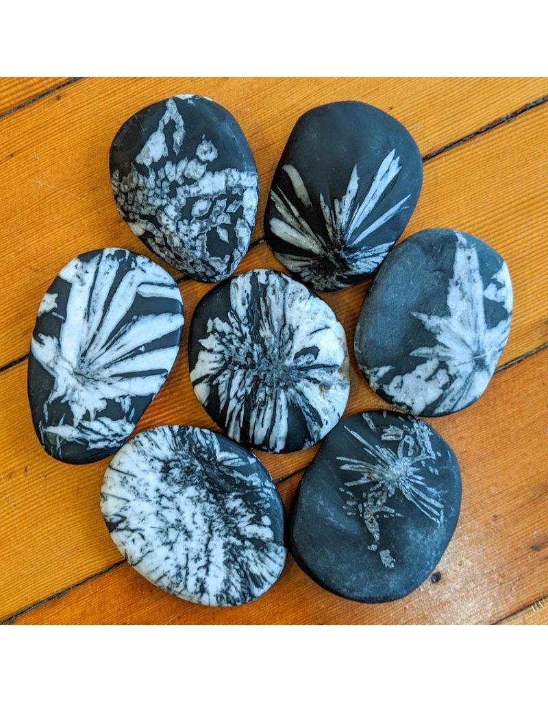 chrysanthemum-stone-celestine-in-shale